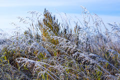 Campo da grama coberto com a geada após a geada do outono Imagens de Stock Royalty Free