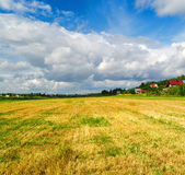 Campo da grama cortada Foto de Stock