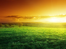 Campo da grama da mola no tempo do por do sol Imagens de Stock Royalty Free