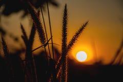 Campo da grama durante a silhueta do por do sol Fotos de Stock