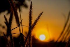 Campo da grama durante a silhueta do por do sol Imagem de Stock Royalty Free