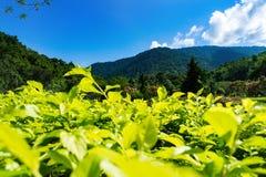 Campo da grama e das flores montes e céu com nuvens reserva bem mantida Imagem de Stock Royalty Free
