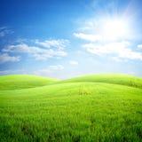 Campo da grama fresca imagem de stock