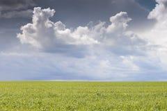 Campo da grama fresca verde sob o céu azul Foto de Stock