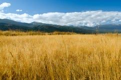 Campo da grama secada na queda Fotos de Stock Royalty Free