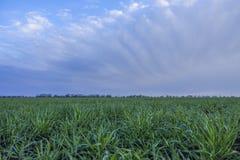 Campo da grama verde coberto com o orvalho Imagem de Stock