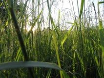 Campo da grama verde do prado abaixo da árvore alta de dia ensolarado fotografia de stock royalty free