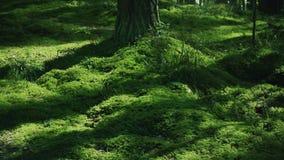 Campo da grama verde suculenta na madeira A grama verde-clara cobriu a terra filme