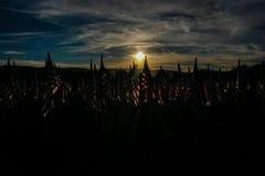 Campo da honra Fotografia de Stock Royalty Free