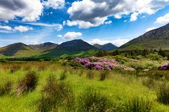 Campo da Irlanda com grama verde e montes Foto de Stock
