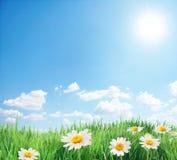 Campo da margarida no dia de verão ensolarado. Fotografia de Stock