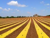 Campo da melancia com tampa plástica Israel Foto de Stock