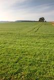 Campo da mola com prado verde Imagens de Stock