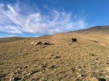Campo da montanha Fotografia de Stock Royalty Free
