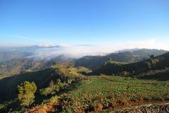 Campo da morango de Tailândia do chiangmai da montanha de Doi Angkhang Fotografia de Stock Royalty Free
