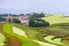 Campo da mostarda e de flor em kunming Chaina Foto de Stock