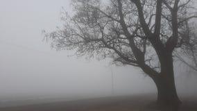 Campo da névoa do inverno fotos de stock