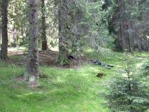 Campo da natureza Fotos de Stock Royalty Free