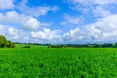 Campo da Normandy-alfafa fotografia de stock