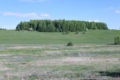 Campo da paisagem com grama verde e floresta Imagens de Stock