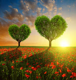 Campo da papoila com as árvores na forma do coração no por do sol Fotos de Stock Royalty Free