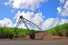 Campo da plantação da cana-de-açúcar com estrada do cascalho e dispositivo da irrigação in-between fotos de stock