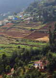 Campo da plantação de chá na vila Imagens de Stock Royalty Free