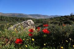 Campo da rocha da paisagem das flores da natureza Foto de Stock Royalty Free