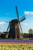 Campo da tulipa e moinhos velhos no netherland Imagens de Stock Royalty Free