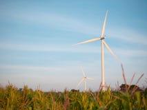 Campo da turbina eólica e de milho com céu azul fotografia de stock