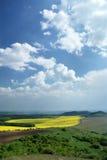Campo da violação e céu azul Fotografia de Stock