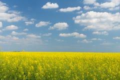 Campo da violação sob o céu nebuloso azul Fotografia de Stock