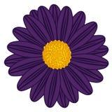 Campo Daisy Violet ilustração royalty free