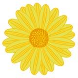 Campo Daisy Yellow ilustração do vetor