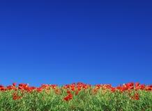 Campo dal papavero e dal cielo blu Fotografia Stock Libera da Diritti