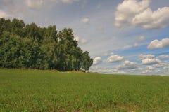 Campo dalla foresta immagine stock libera da diritti