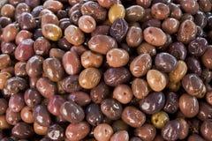 Campo dalle olive Immagine Stock