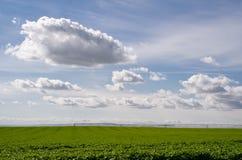 Campo das batatas com as nuvens no céu Imagem de Stock