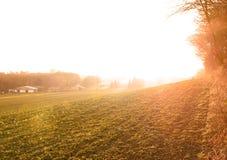 Campo das beterrabas no por do sol foto de stock royalty free