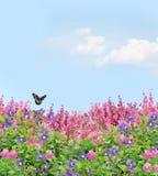 Campo das flores foto de stock
