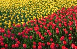 Campo das flores Fotos de Stock Royalty Free