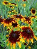 Campo das flores Imagens de Stock Royalty Free