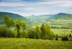Campo das flores brancas Mola nas montanhas Fotos de Stock Royalty Free