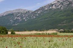 Campo das papoilas nas montanhas fotografia de stock royalty free