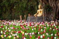 Campo das tulipas em Wat Phan Tao Imagens de Stock