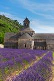 Campo de Abbey Senanque y de la lavanda, Francia Fotos de archivo libres de regalías