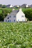 Campo de alcachofas, Bretaña, Francia imagen de archivo