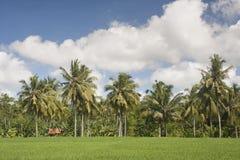 Campo de almofada com fundo do céu azul Imagens de Stock