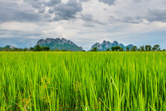 Campo de almofada em Tailândia Imagens de Stock Royalty Free