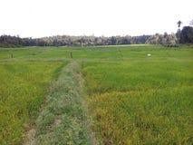 Campo de almofada lindo da natureza da beleza & poço natural Imagens de Stock